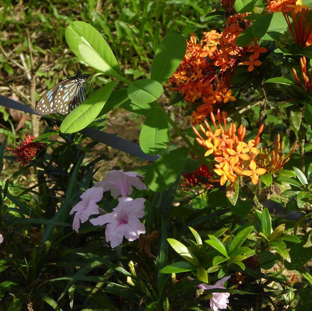 Landscape Gardening Hourly Rates against Organic Gardening