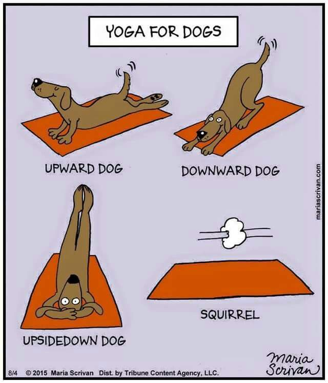 Yoga for Pups.... | Dog yoga, Yoga funny, Upward dog