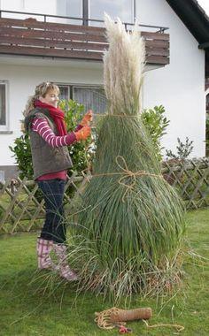 Pampasgras: Imposante Solitärpflanze