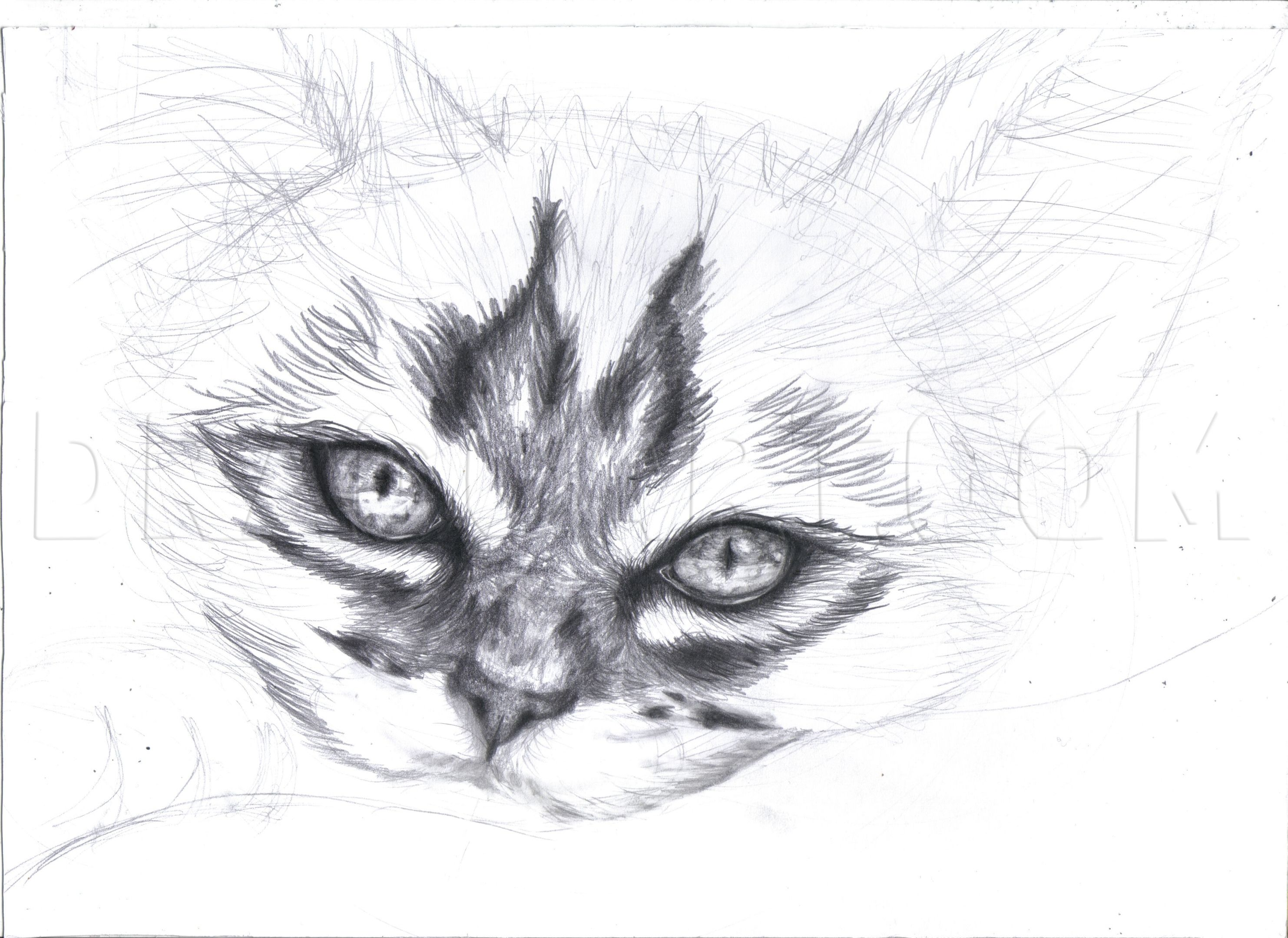 How To Draw A Realistic Kitten Cute Kitten Step By Step Drawing Guide By Duskeyes969 Drago In 2020 Realistic Cat Drawing Realistic Animal Drawings Kittens Cutest