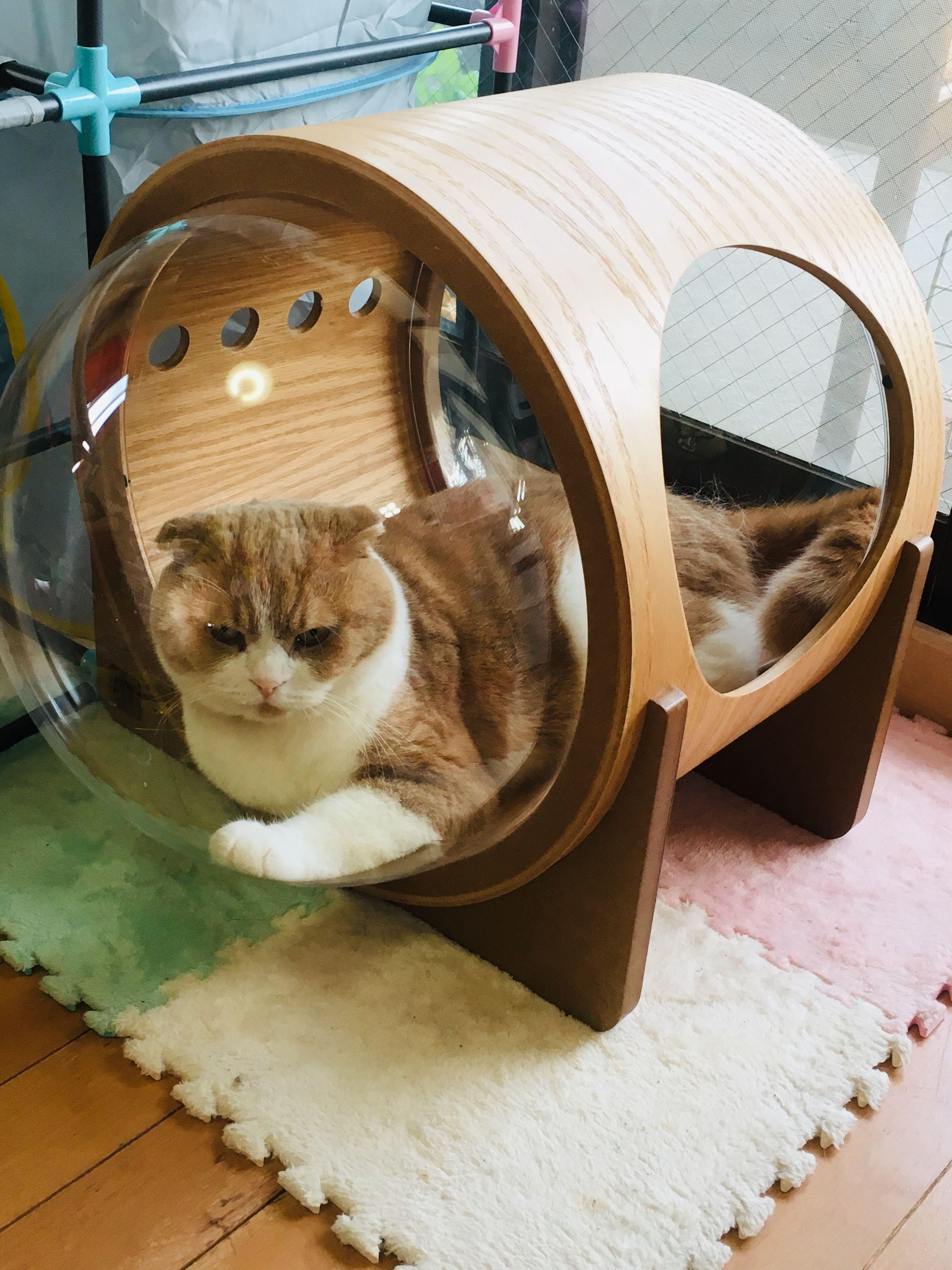 宇宙船アルファ ペット用品の通販サイト ペピイ Peppy ペット用品 ペット 猫用ベッド