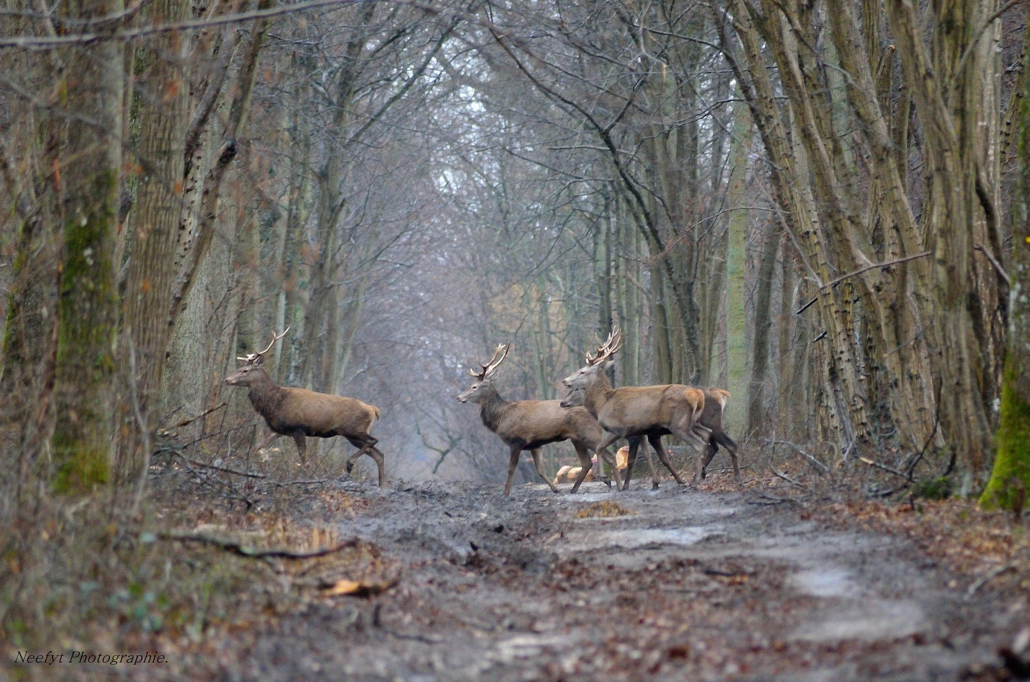 Cerf. by Fabrice Denise on 500px