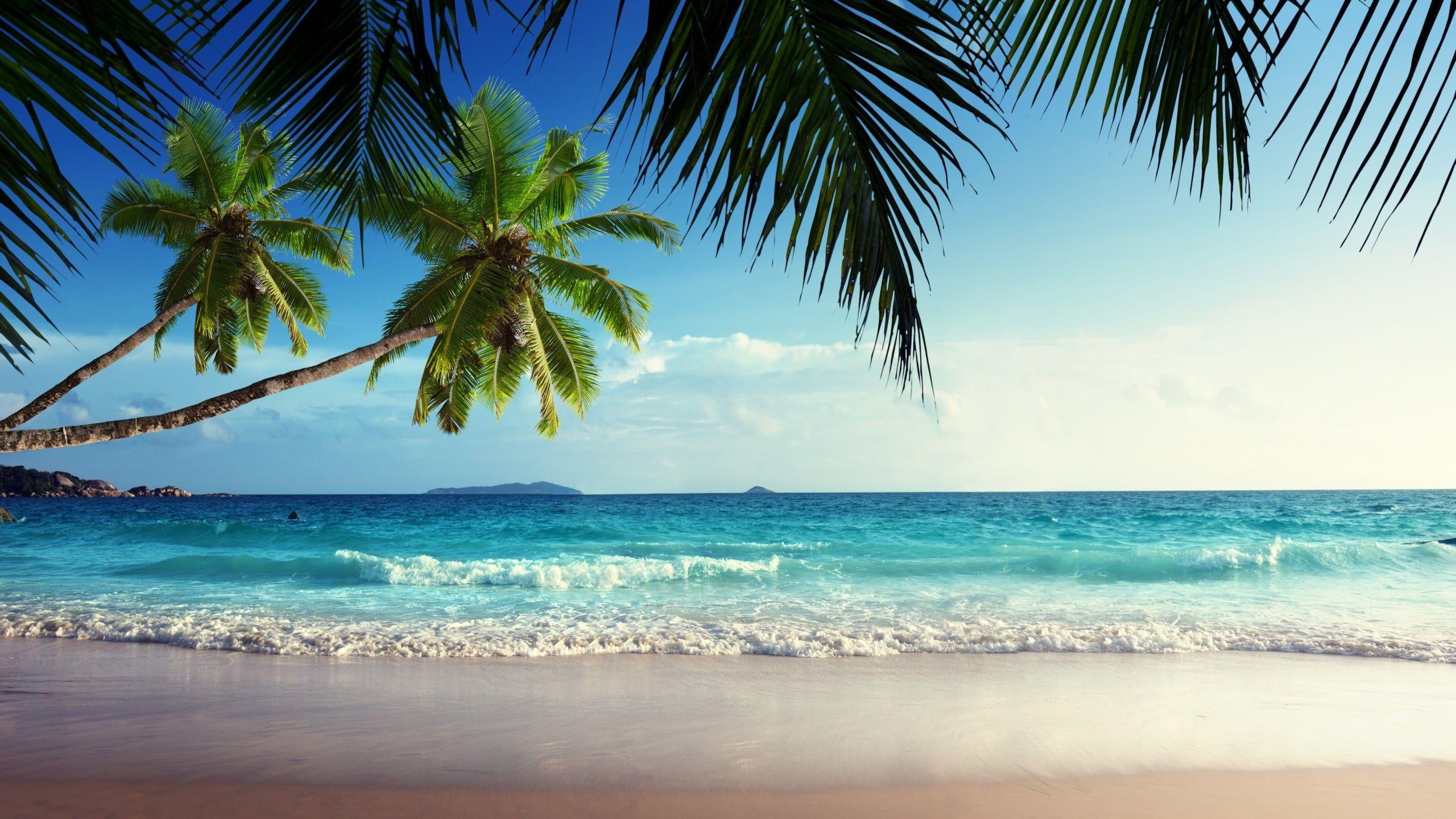 Green Coconut Tree Beach Sand Tropical Island Palm Trees Sea Waves 2k Wallpaper Hdwallpaper Deskto Beach Wallpaper Beach Wall Murals Tropical Beaches Tropical island beach palm sea sand