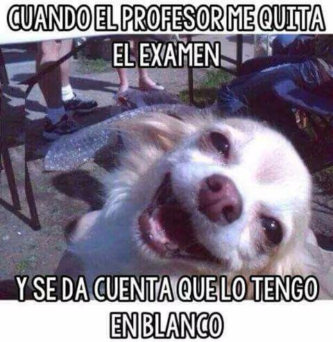 Jjajaja Y Lo Regana A Uno Memes Perros Fotos Divertidas De Animales Animales