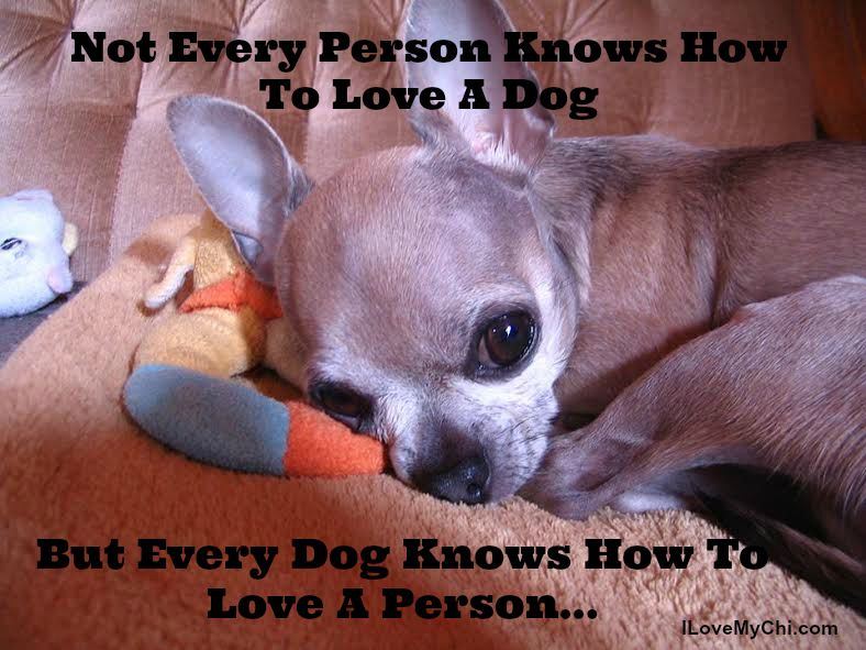 20 Chihuahua Memes That Will Make You Cry Cute Chihuahua
