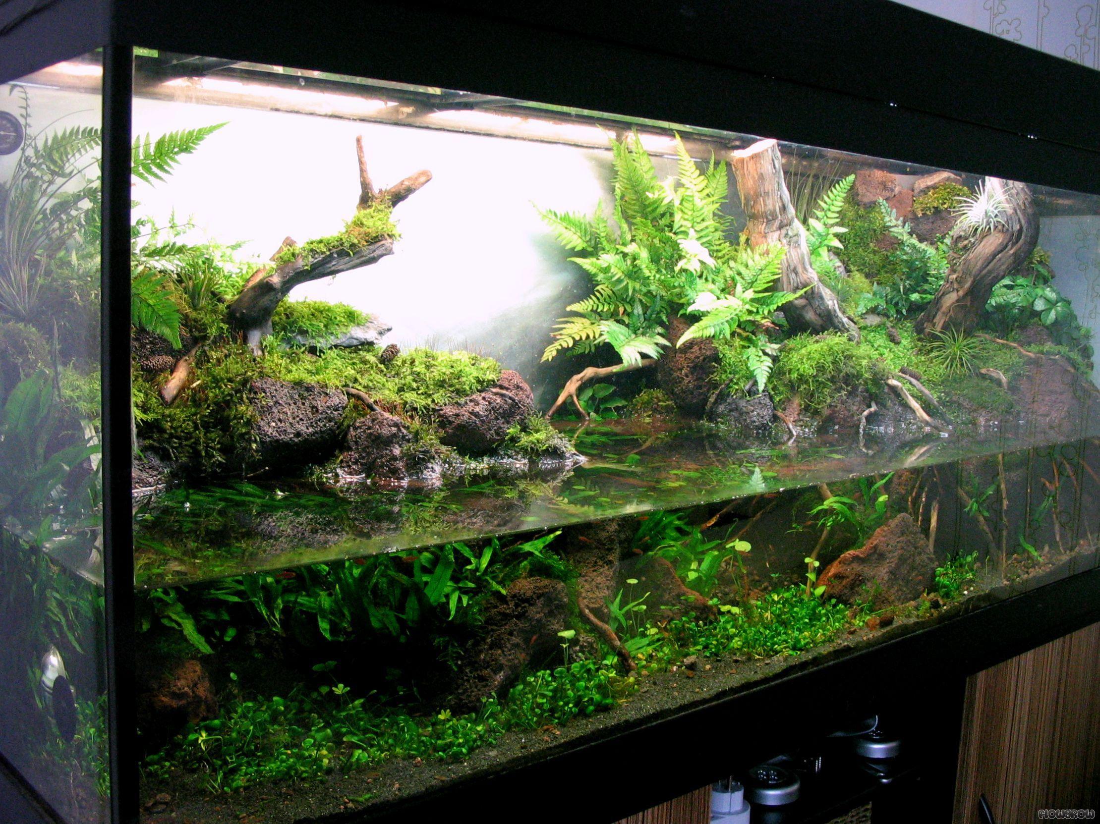 pin von luchito suz auf vivarium pinterest aquarium aquarien und aquarium terrarium. Black Bedroom Furniture Sets. Home Design Ideas