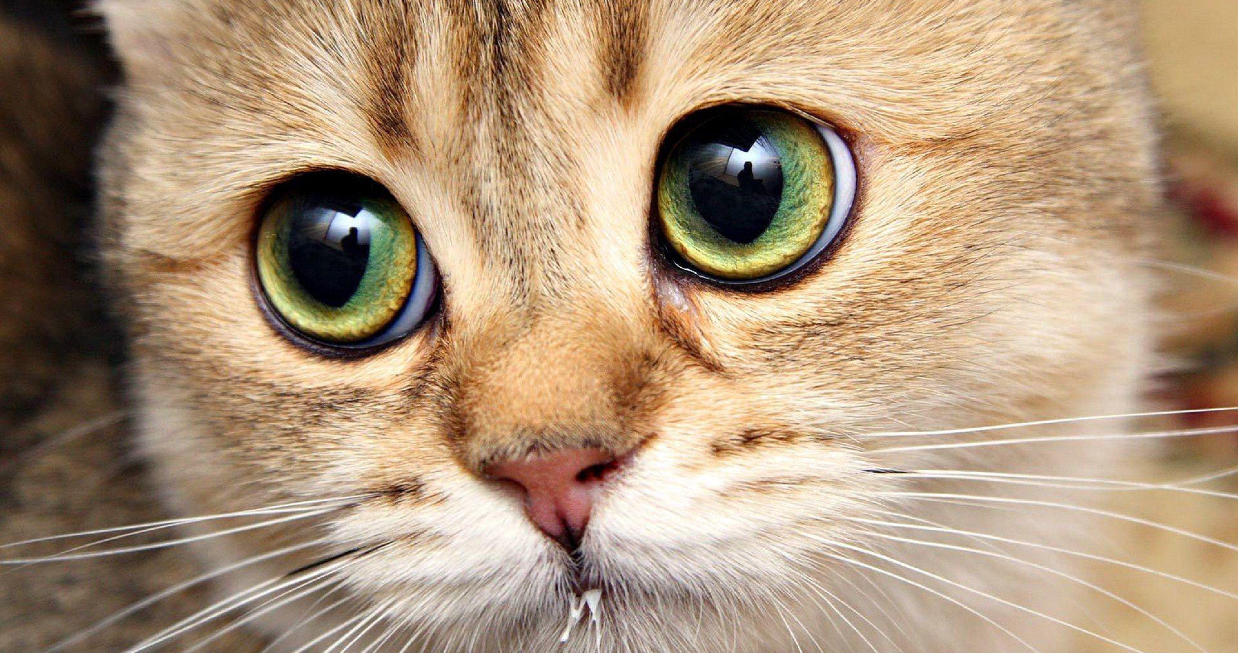 Cutie Cat 4k Ultra Hd Wallpaper S Izobrazheniyami Krasivye Koshki