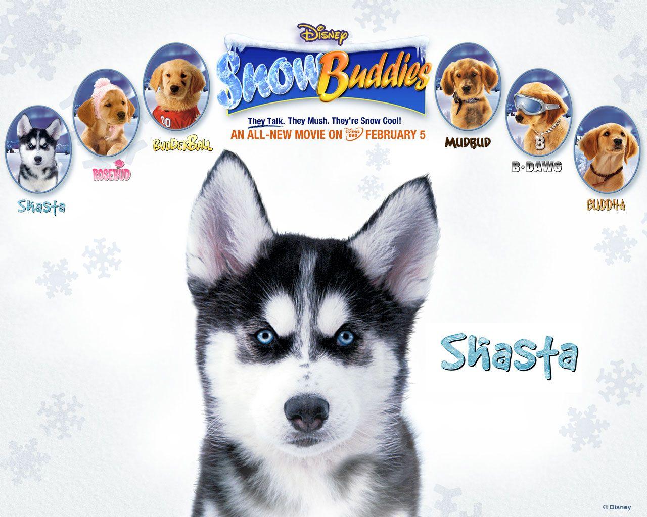 Snow Buddies Air Buddies Movies Dog Movies Snow Dogs