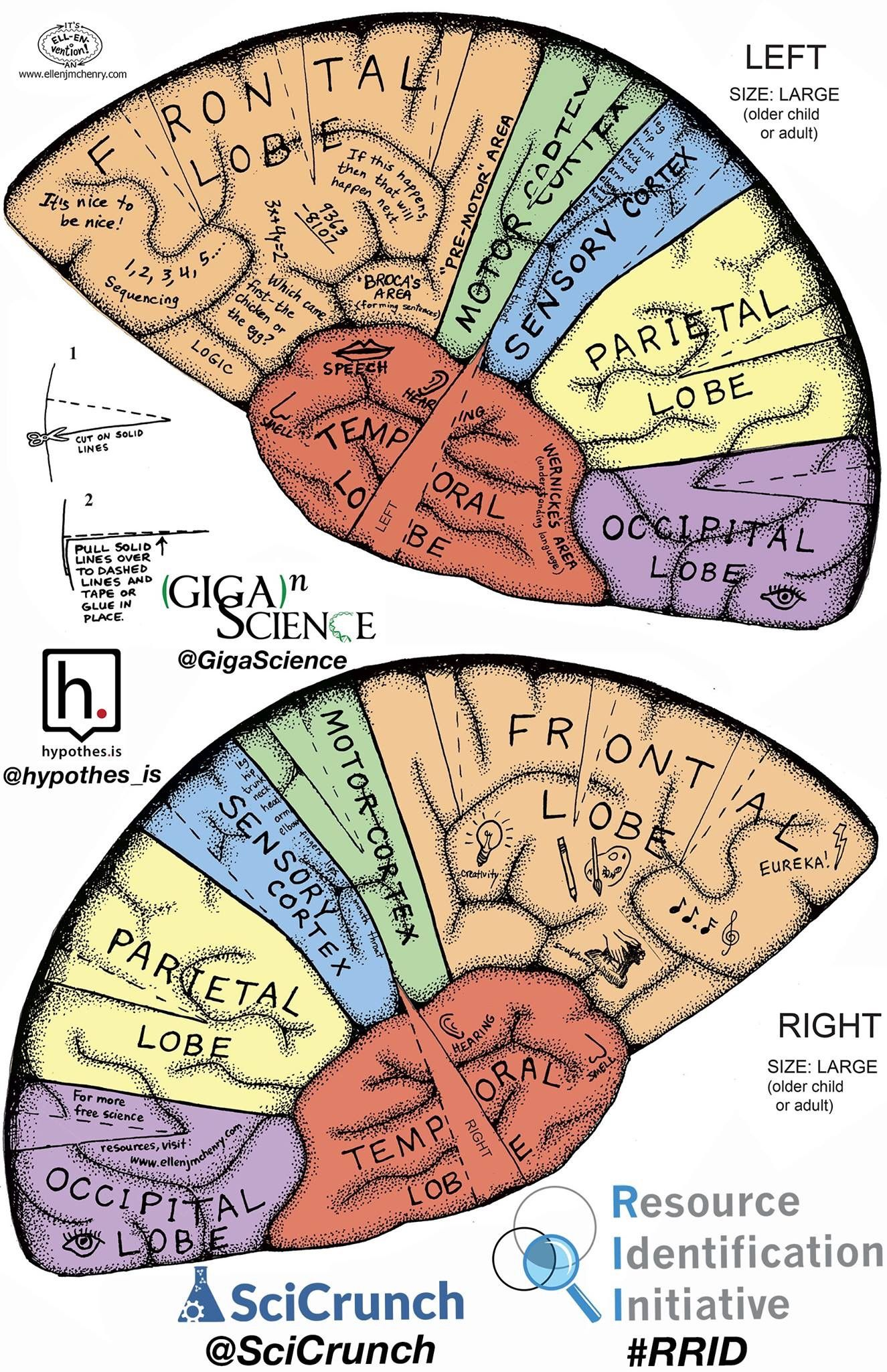 Brain Hat Brain Ap Psychology Brain Anatomy Brain Poster