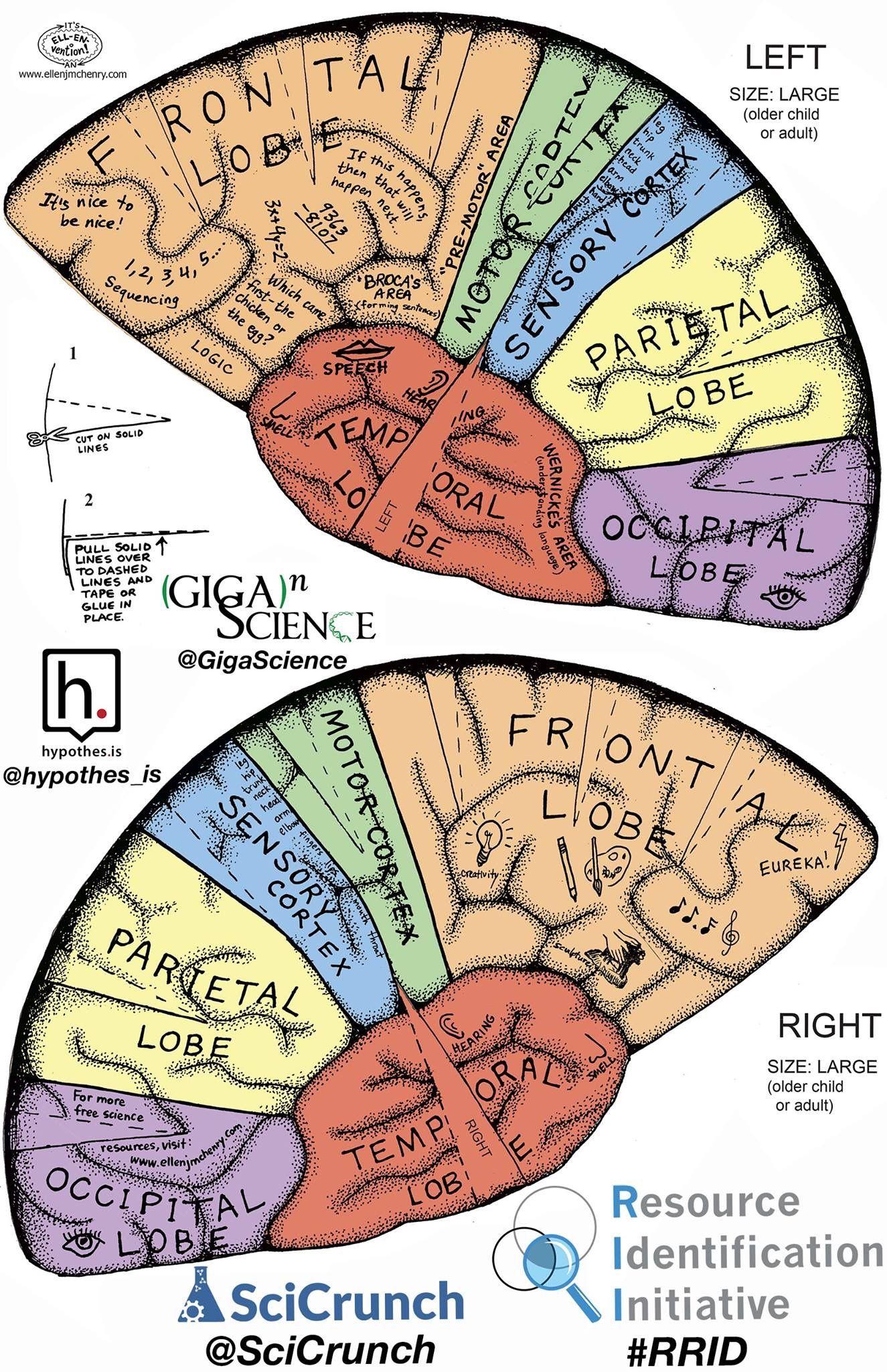 brain model diagram regulator wiring hat gehirn projekte