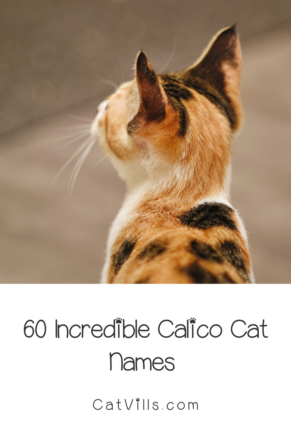 60 Clever Calico Cat Names You Ll Adore Catvills In 2020 Calico Cat Names Cat Names Cute Cat Names