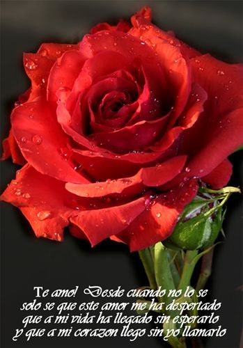 Frases De Amor Para El Dia De Los Enamorados O San Valentin Fraces