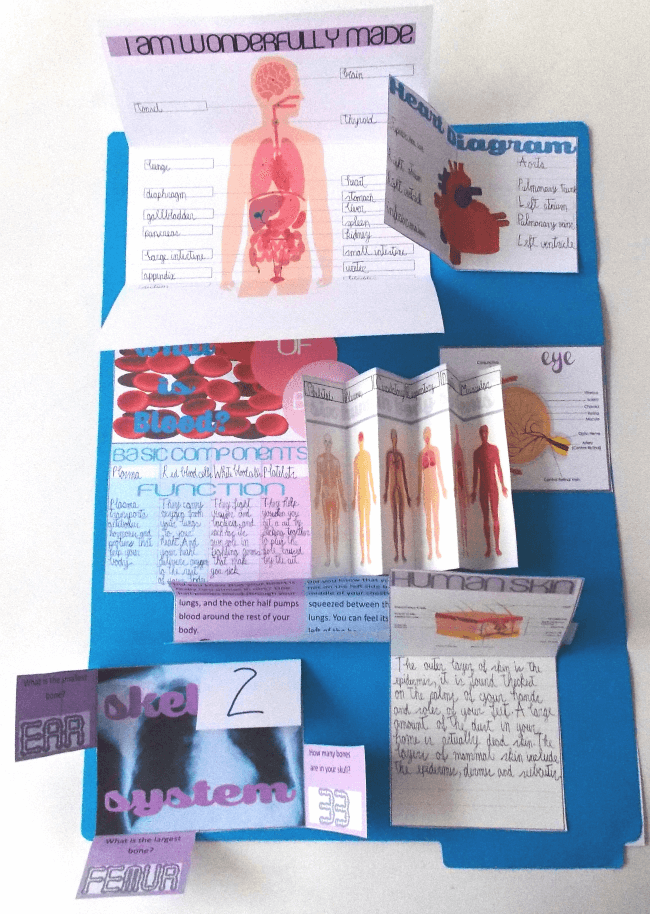 Free Human Body Lapbook and Unit Study | Pinterest | Körper, Schule ...