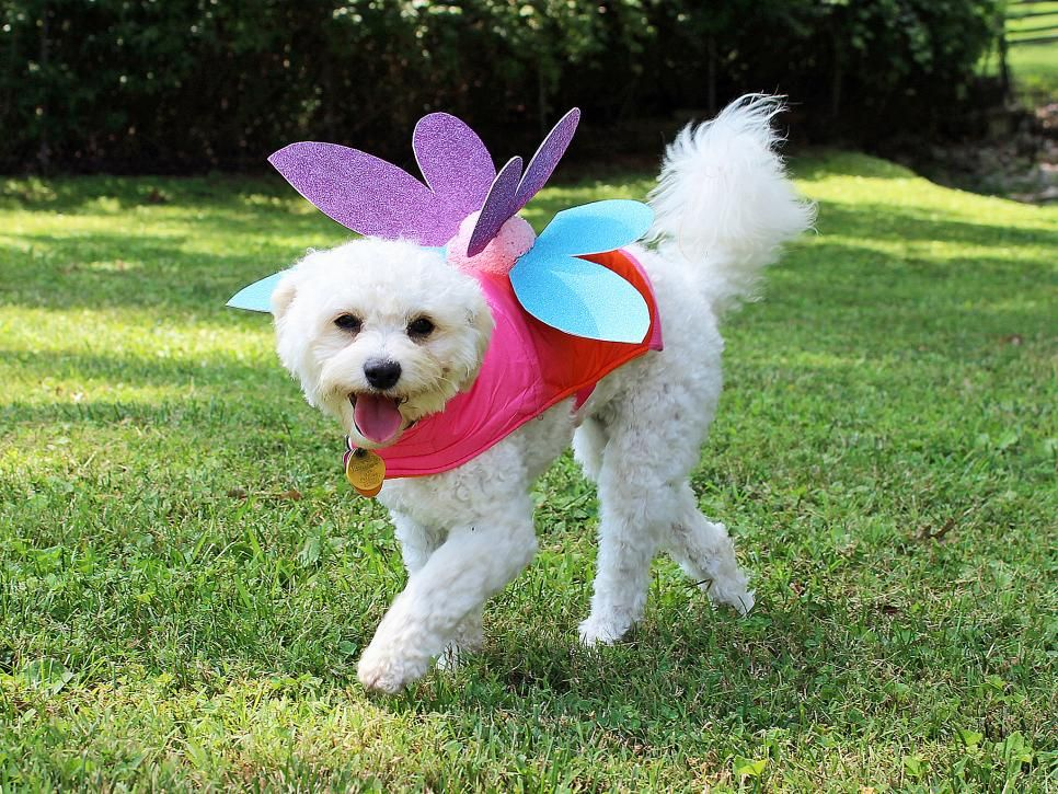 18 diy pet costumes for halloween pet costumes dog and cat 18 diy pet costumes for halloween solutioingenieria Images