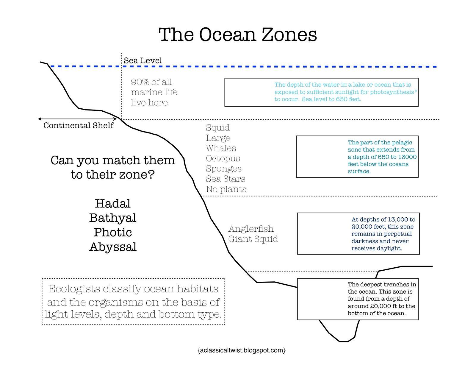 Ocean Zones Printable Ocean Zones Ocean Science Kindergarten