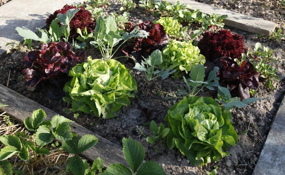 salat aussäen, pflegen und ernten, Gartengerate ideen