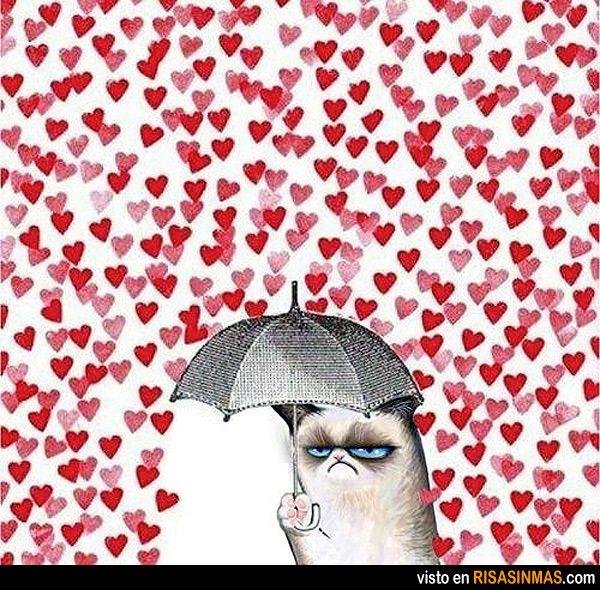 odio san valent n amor y amistad pinterest memes humor and grumpy cat. Black Bedroom Furniture Sets. Home Design Ideas