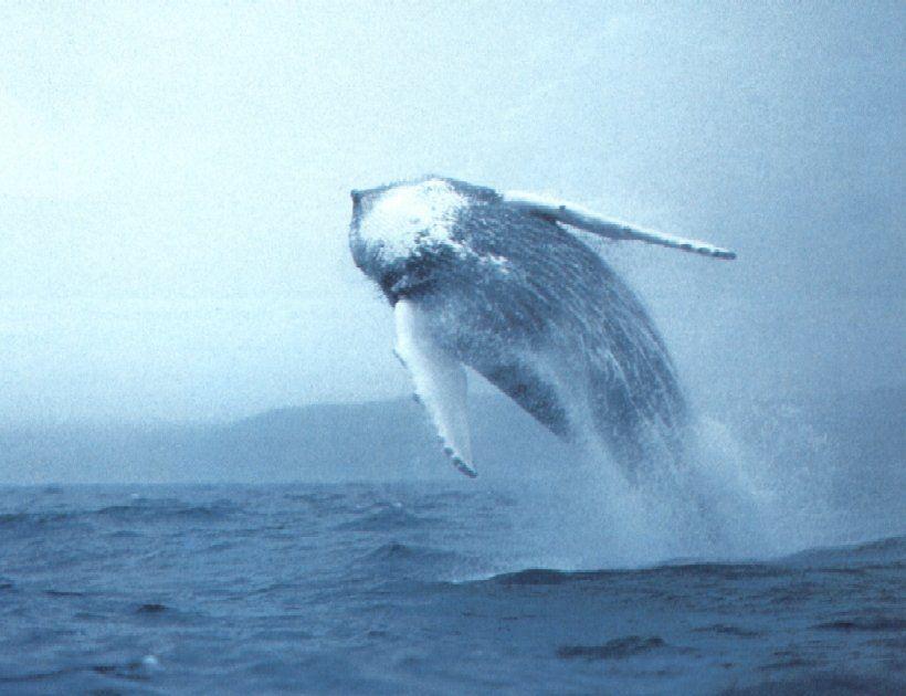Whale, somewhere.
