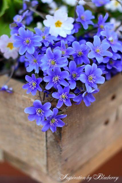 Pin De Cecilia D Em My Love Flowers Floriculturas Jardins Secretos
