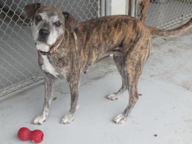 Adopt Grace on Humane society, Pet id, Adoption