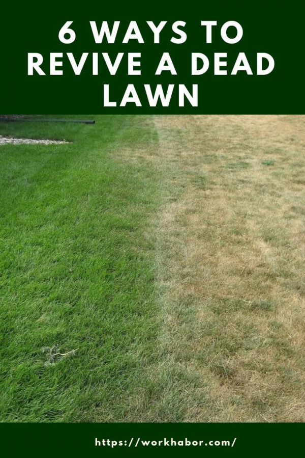 If You Have A Lawn That Has Been Dead For Just A Short Time There Are Plenty Of Modern Design In 2020 Green Lawn Care Spring Lawn Care Diy Lawn