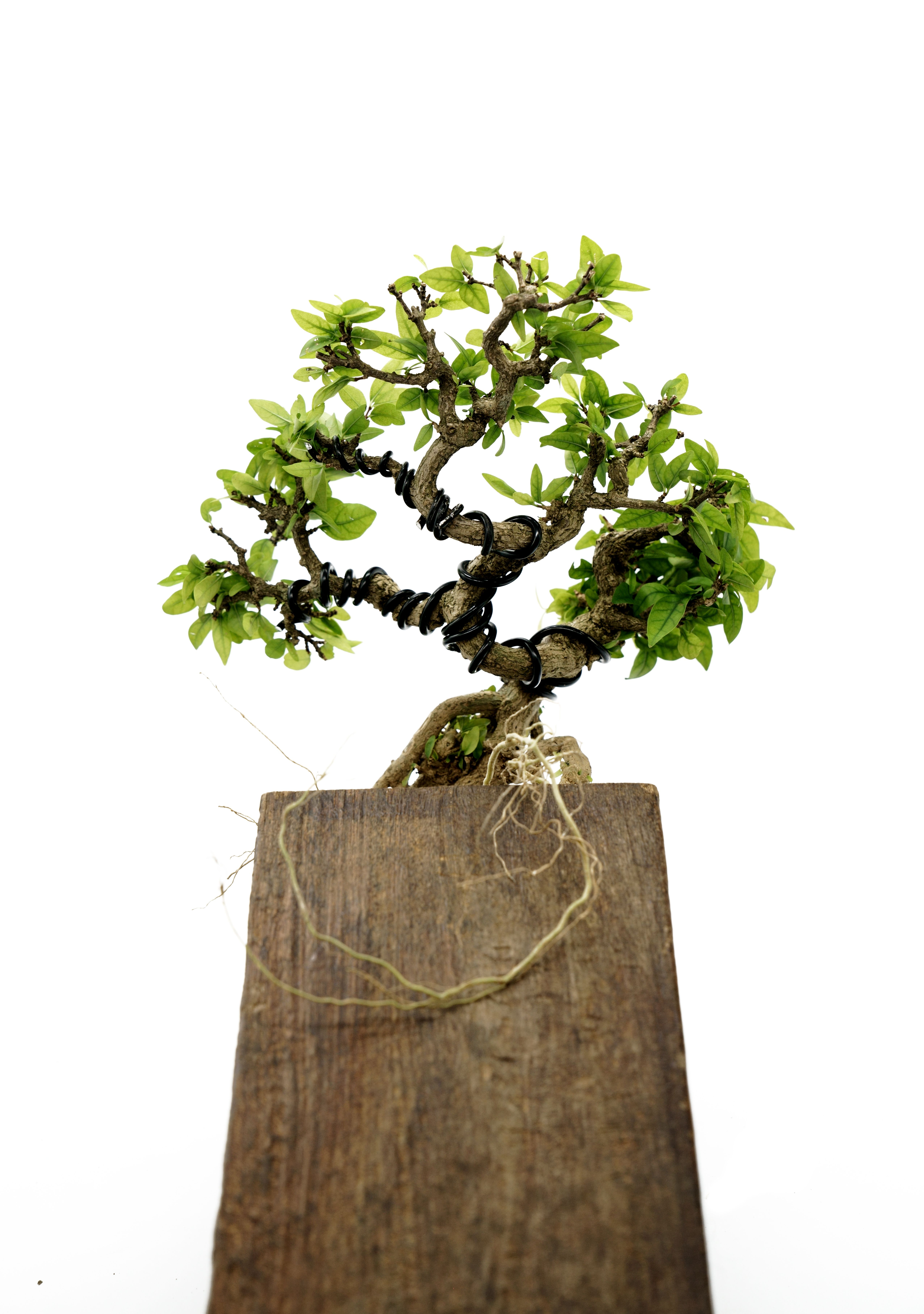 Bonsai On A Block Japanese Bonsai Garden Art Bonsai