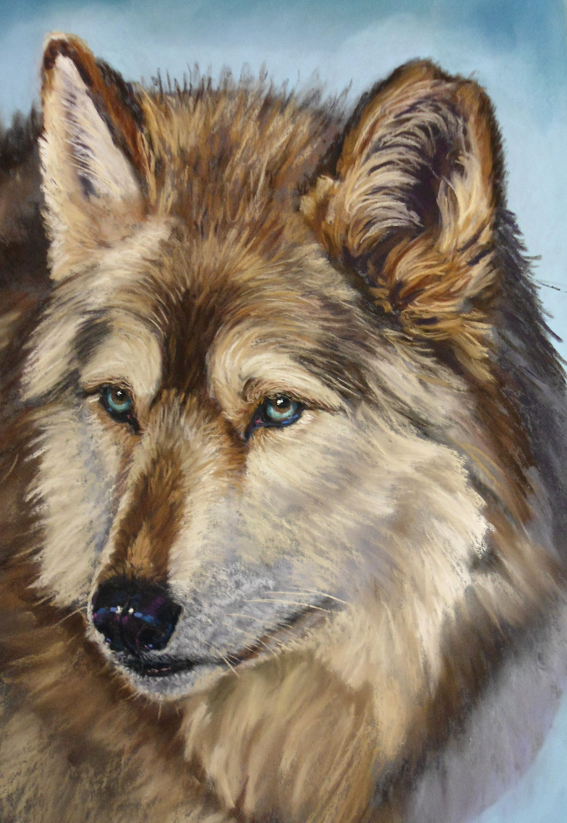 Look at this incredible portrait of a wolf by Catherine Inglis in pastels. Available now on ArtTutor.com