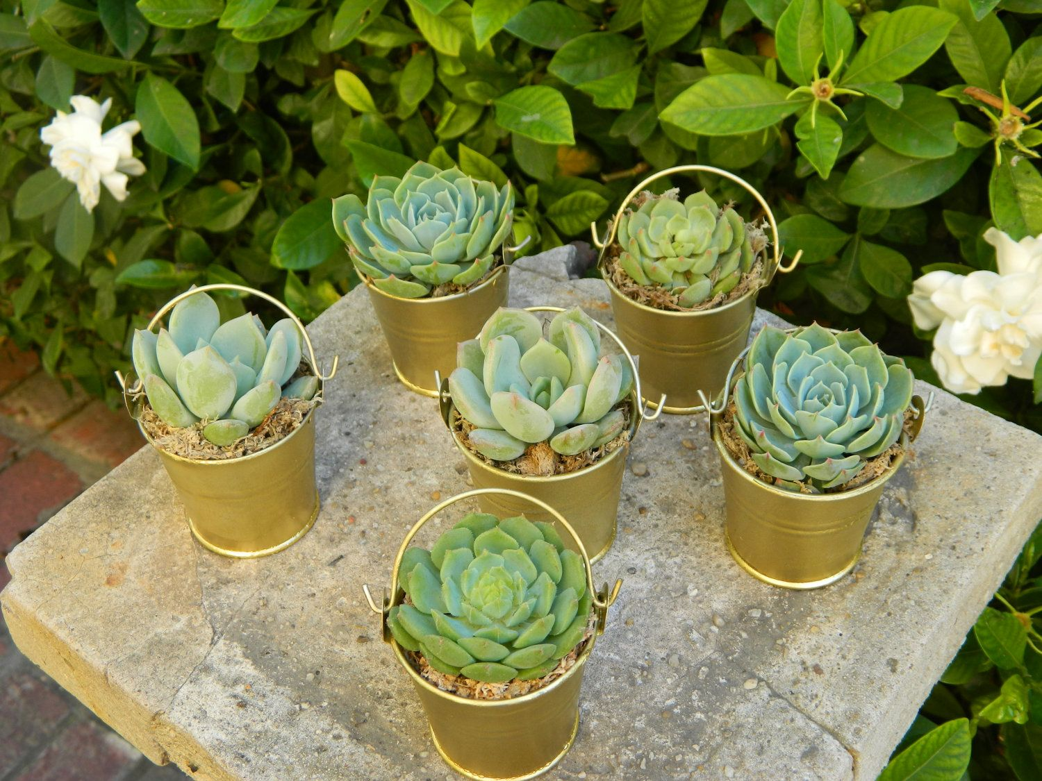 Special Listing for Erin 80 Succulent Wedding Favors Rustic