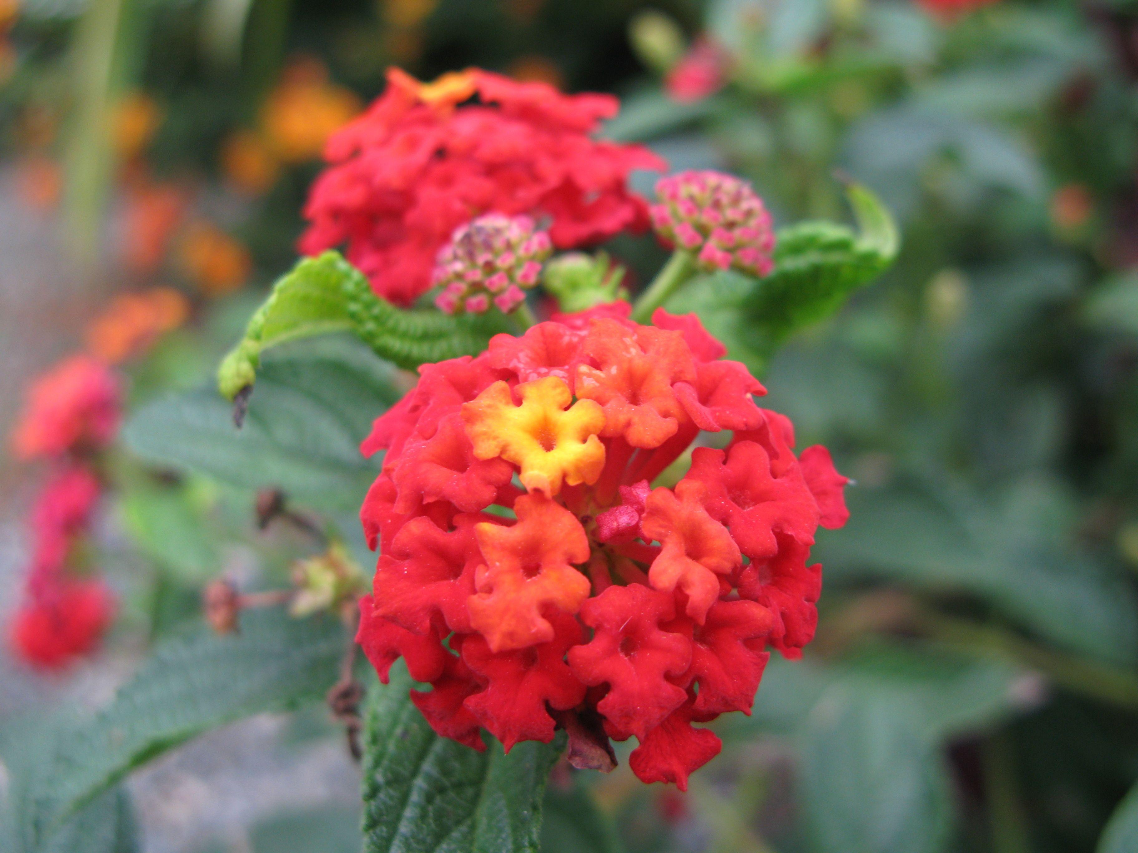 Flower Harrison Hot Springs British Columbia Flora Pinterest