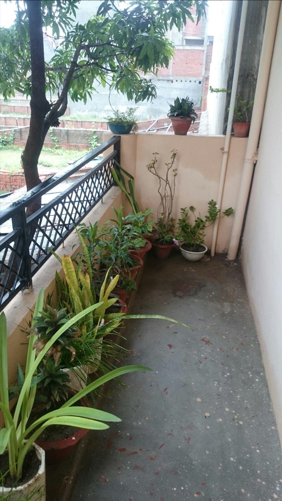 Pin by Jessica Ruth on Simple Balcony gardening | Balcony garden ...
