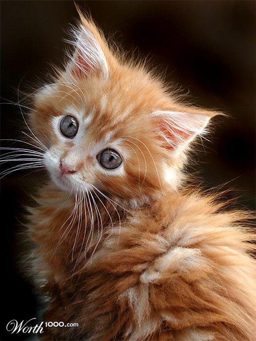 Pet Portraits 2007 - Worth1000 Contests