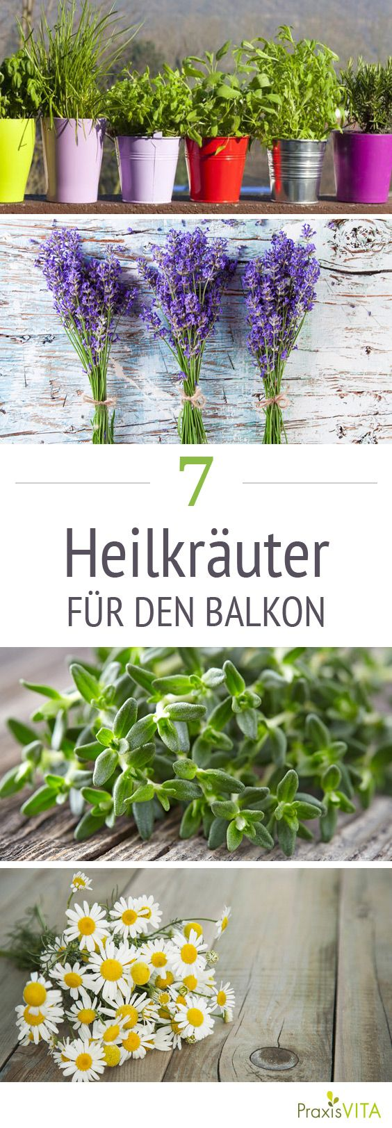 die 7 besten heilkr uter f r den balkon gardening pinterest garten balkon und kraut. Black Bedroom Furniture Sets. Home Design Ideas