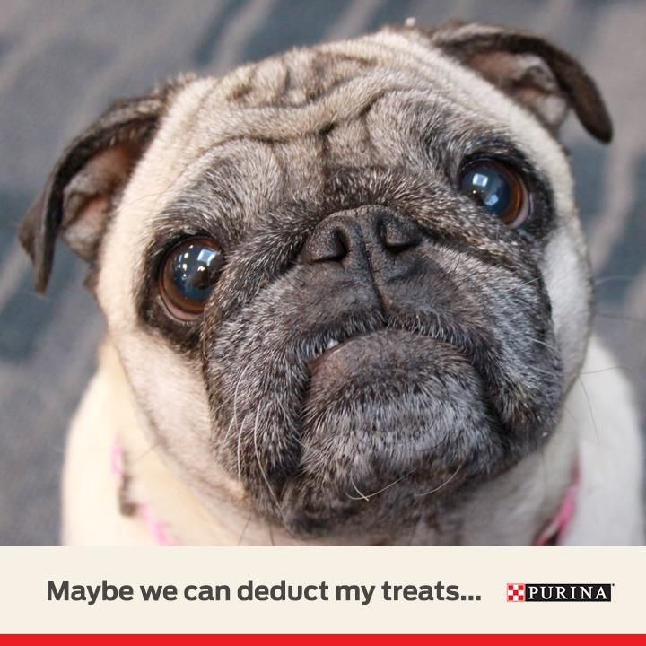 Our Pets Help Us Get Through The Most Taxing Of Times Taxseason Dog Activities Pets Dogs