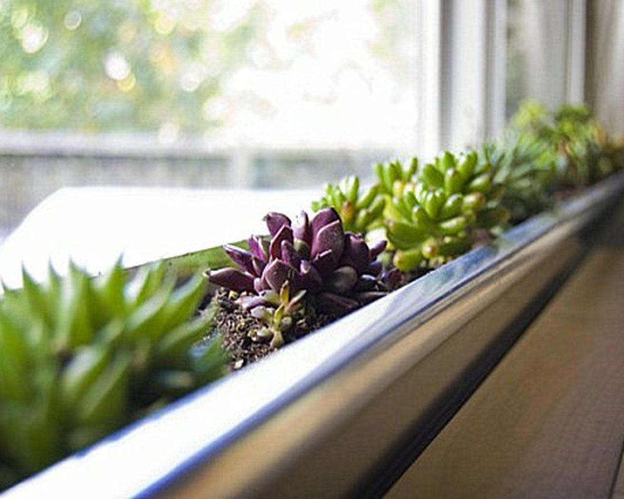 17 bsta bilder om Indoor Gardening p Pinterest Trdgrdar