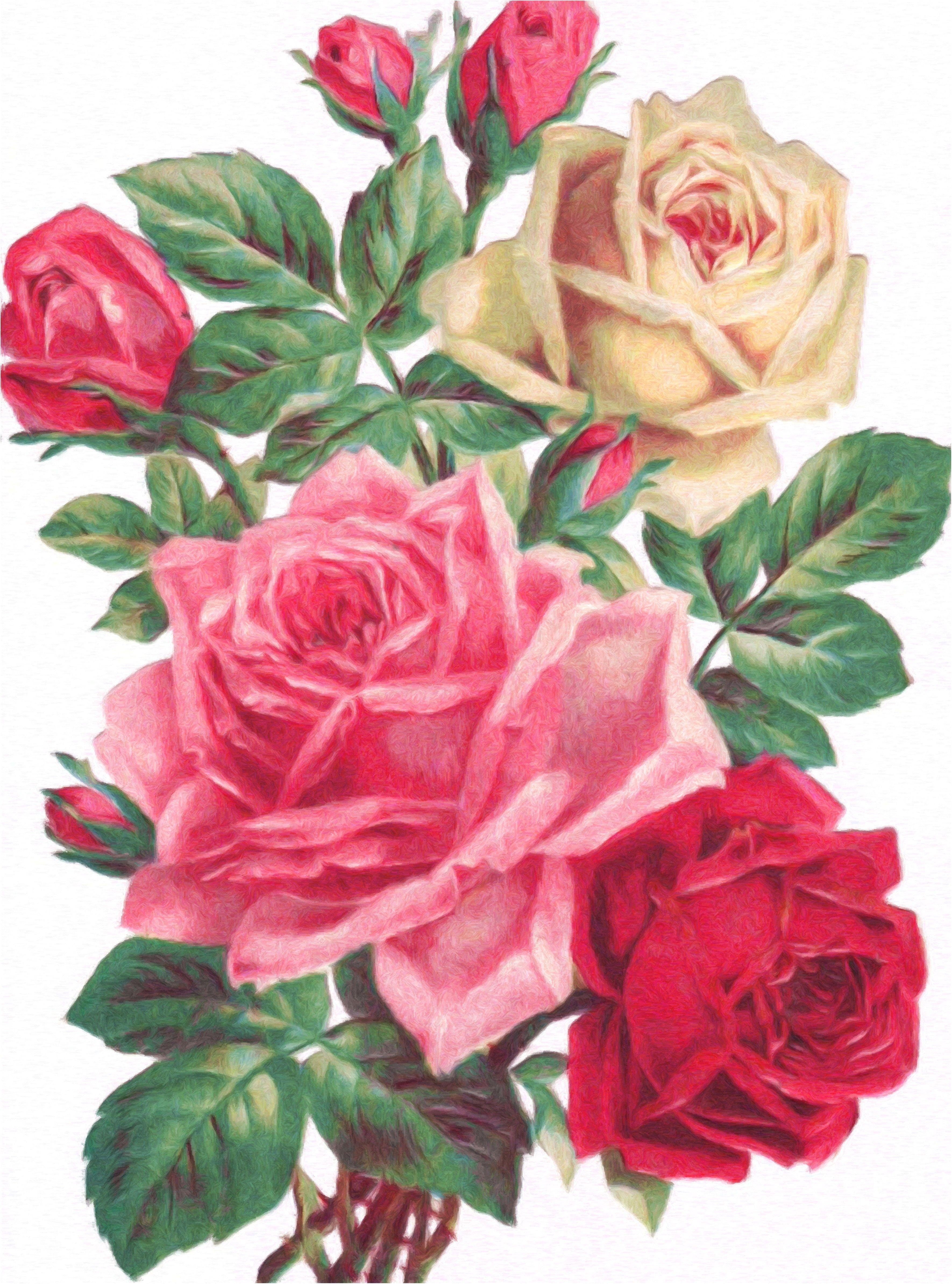Рисованные картинки розы