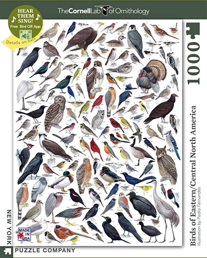 New York Puzzle Company Cornell Lab Birds of Eastern