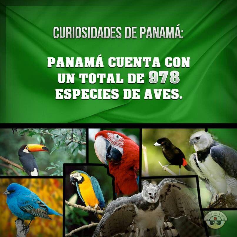 Fauna Panameña. ♥