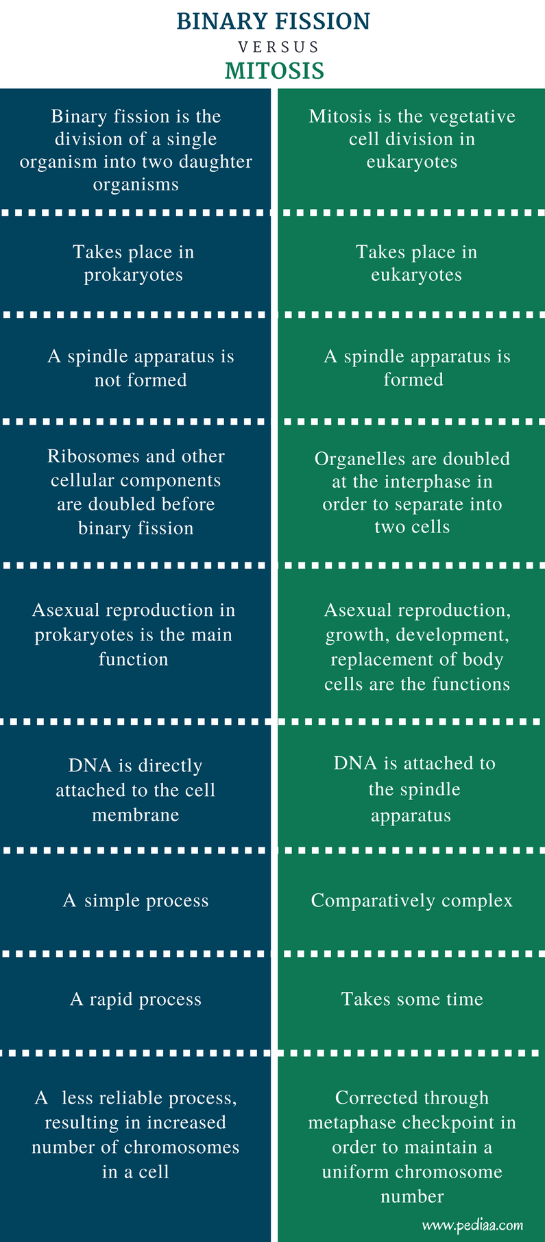 Difference Between Binary Fission And Mitosiscomparison Summary