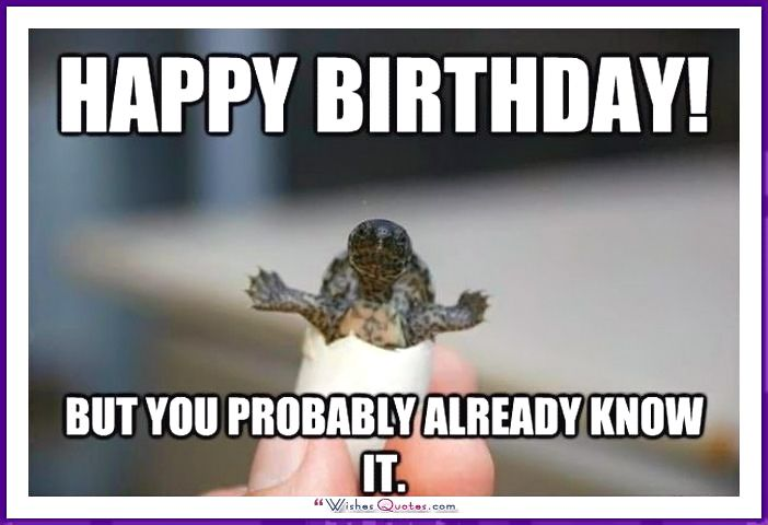 Happy Birthday Memes With Funny Cats Dogs And Animals Funny Birthday Meme Funny Happy Birthday Meme Happy Birthday Meme