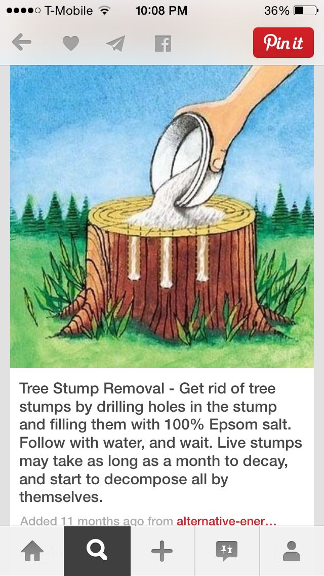 Stump Rmvl Stump Removal Tree Stump Kill Tree Stump