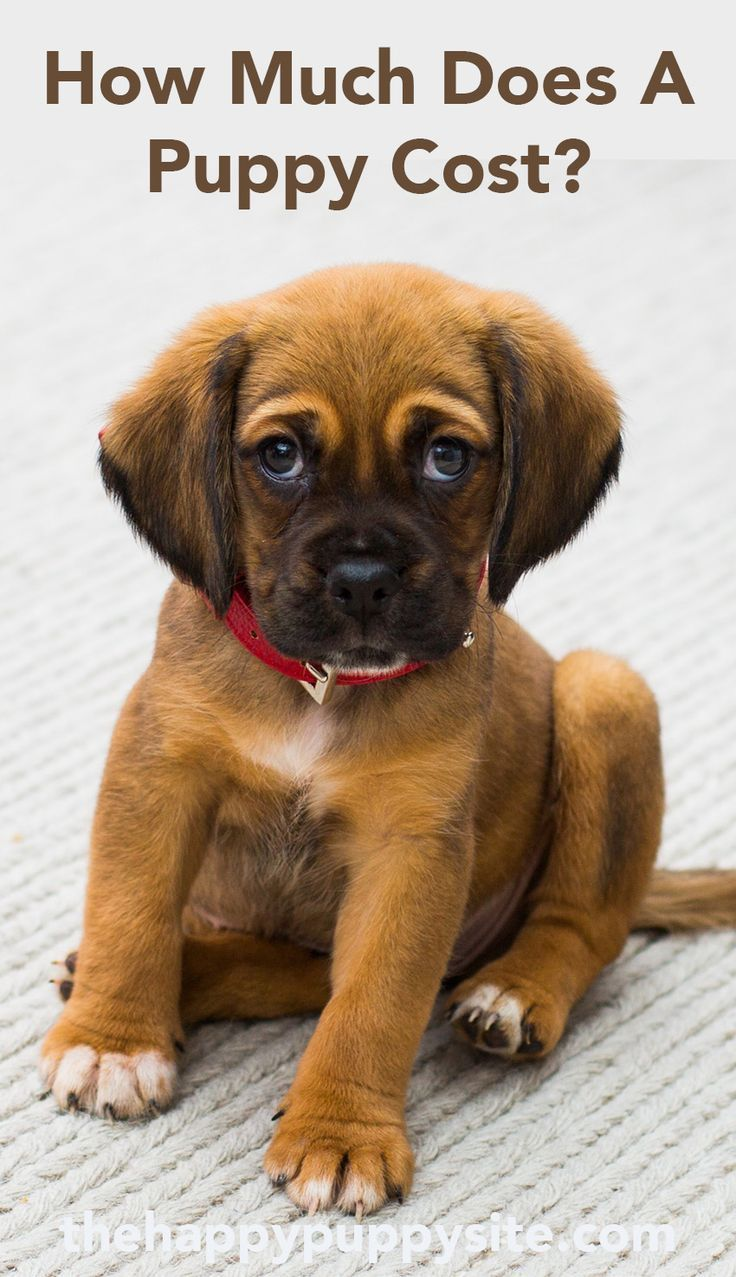 How Much Does A Dog Cost? The Costs of Buying and Owning a