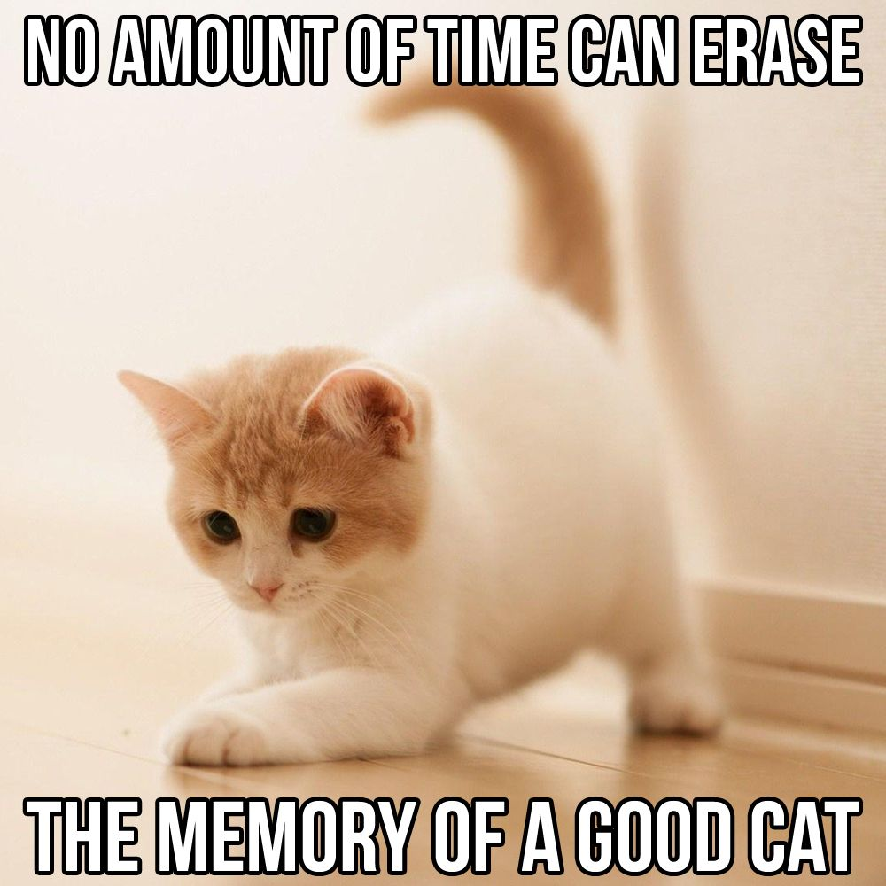 Catsmemes Catsgifmemes Funny Animal Pictures Cat Memes Cats Funnycatsjust Like Cat Funniest Animals Cat Fun Cat Funny Cat Cool Cats Funny Cats Cats
