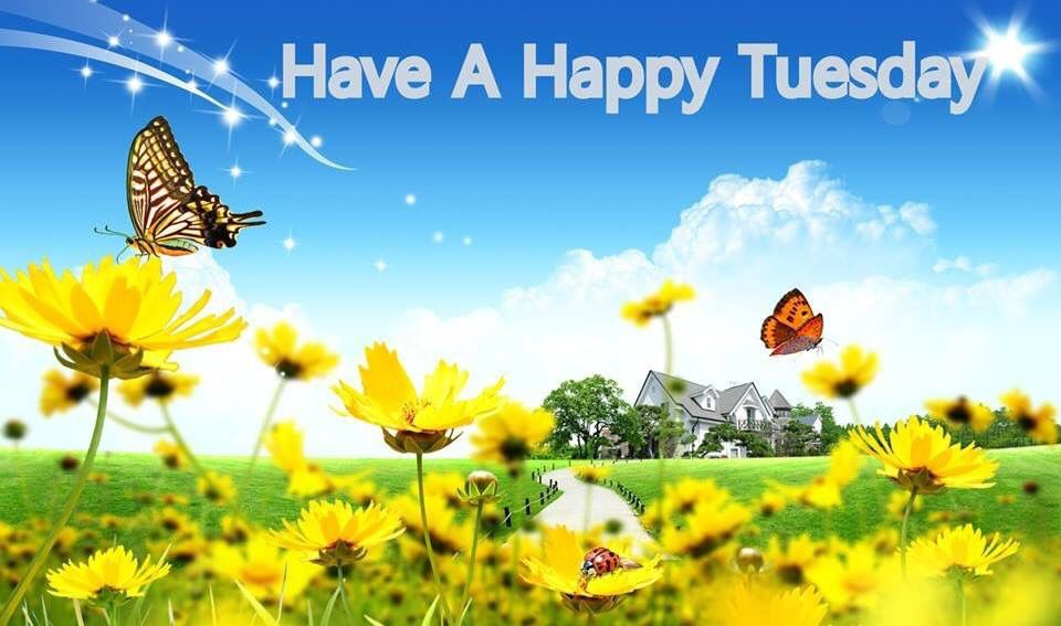 Have A Happy Tuesday Spring Quote Good Morning Tuesday Tuesday Quotes Good  Morning Quotes Happy Tuesday