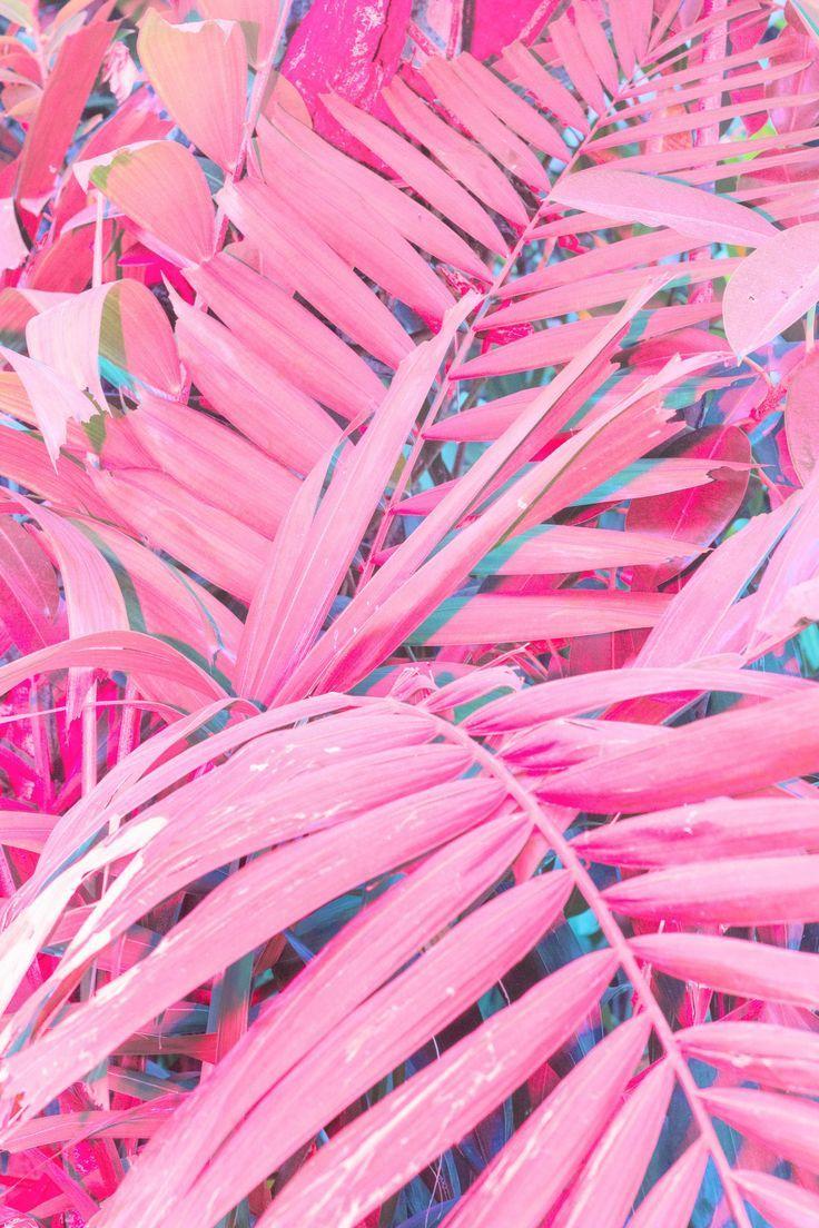 love those pinks <3