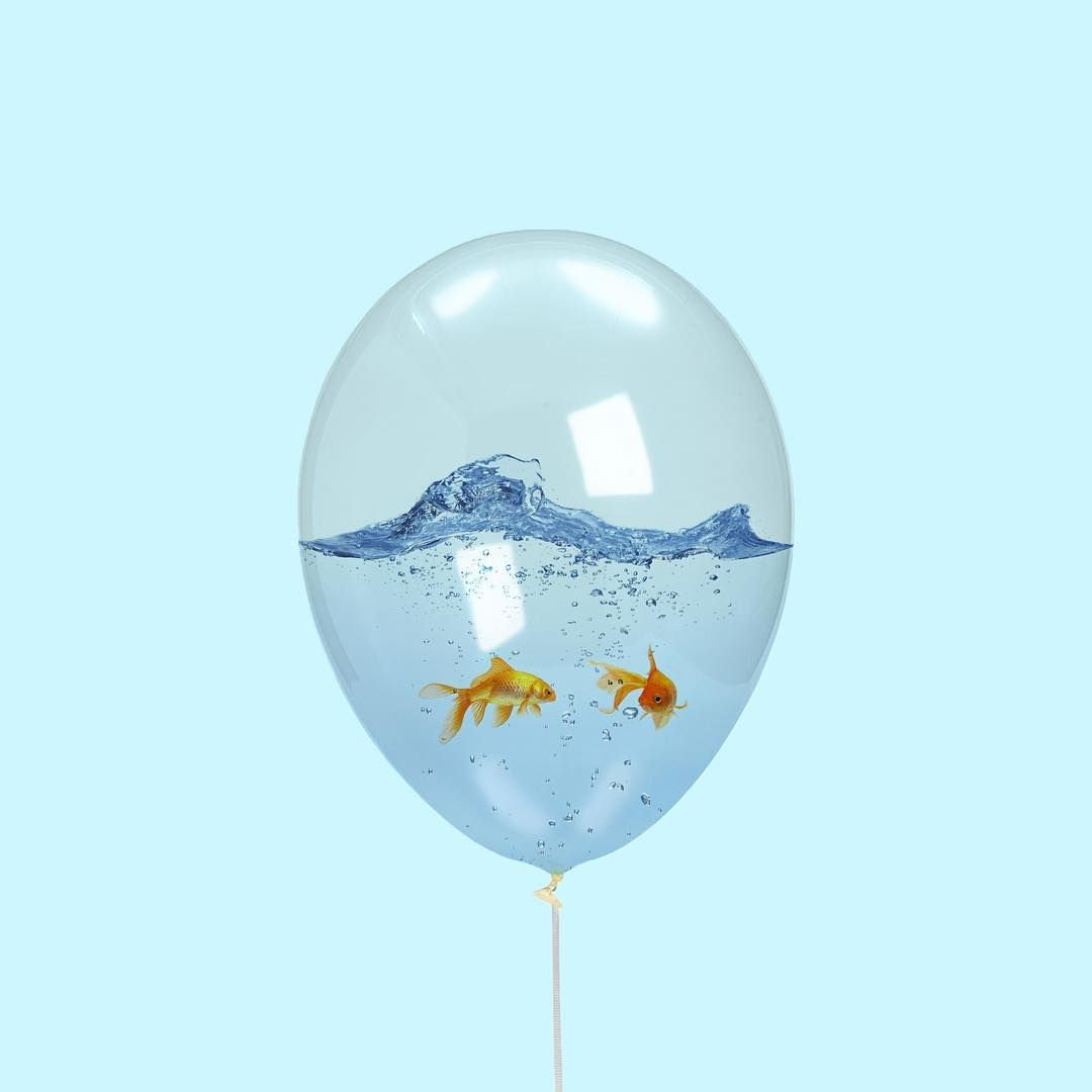 Walking the fish | Candy minimal | Pinterest