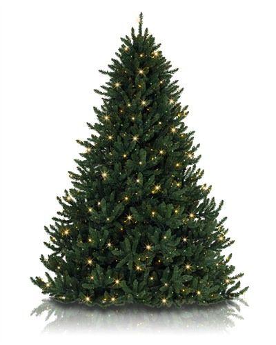 Alexander Fir Tree Fir Christmas Tree Artificial Christmas Tree Green Christmas Tree