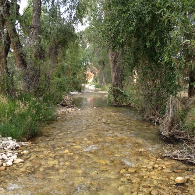 Creek at Trapper