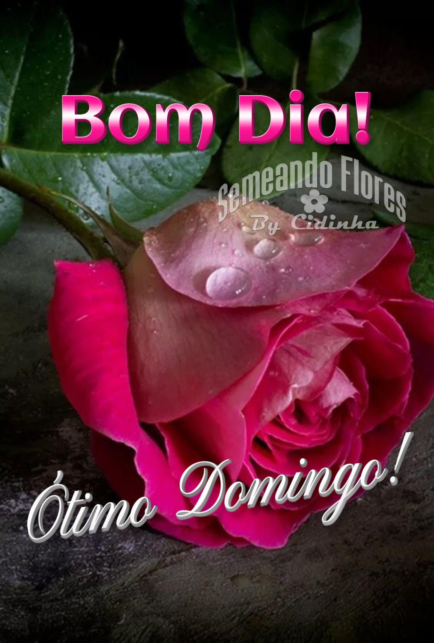 Pin De Cida Fragoso Em Flores Que Me Encantam Bom Dia Gratidao