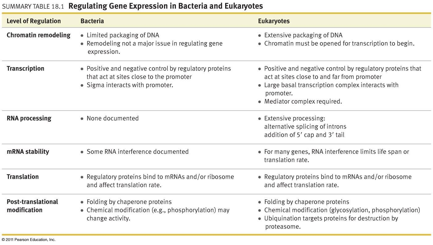 Gene Expression Prokaryotes Vs Eukaryotes Worksheet Answers ...