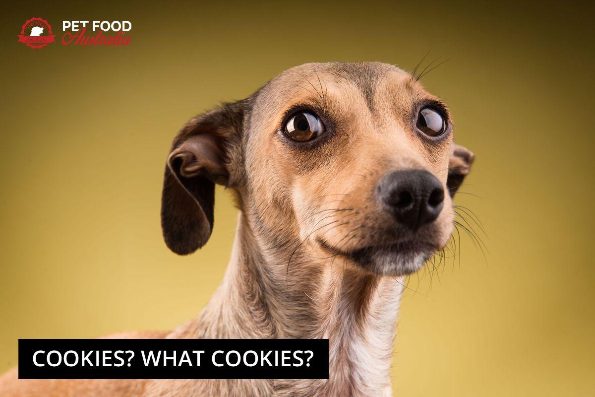 Guilty Dogs Grain Free Dog Food Dog Food Online Best Dry Dog Food
